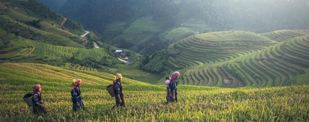 Agricultura en Camboya
