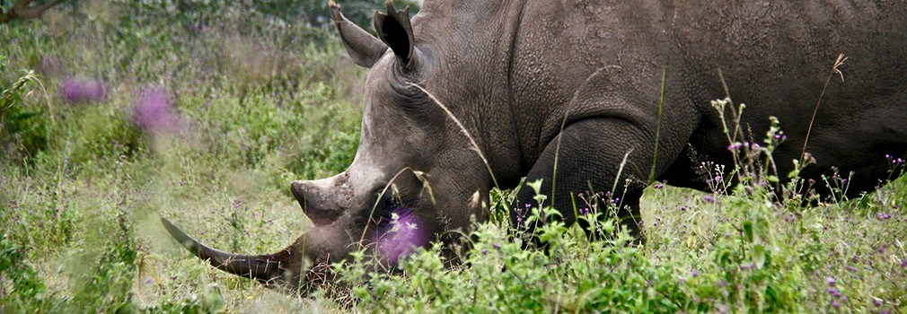 Un elefante en la reserva de Masái Mara