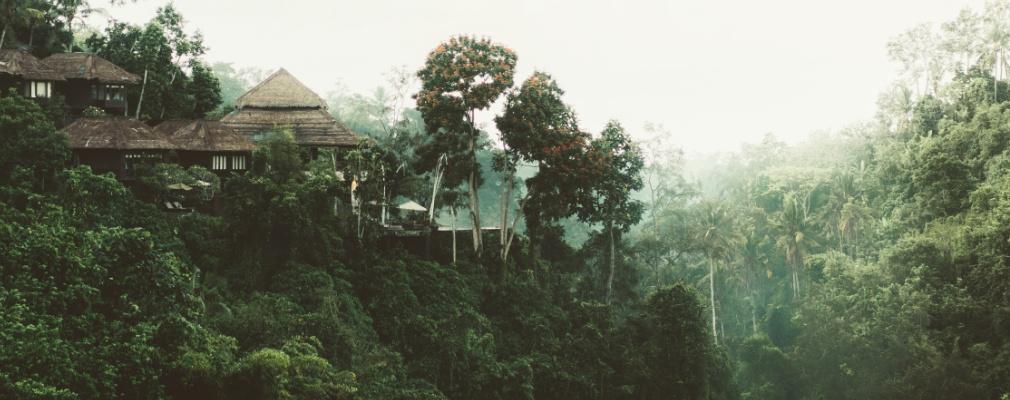 Selva en Sri Lanka
