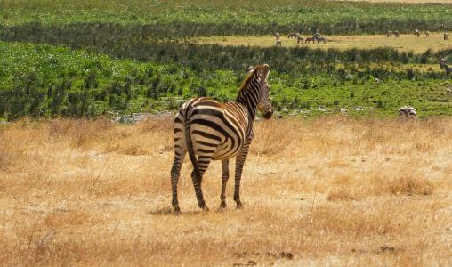 Visado Tanzania